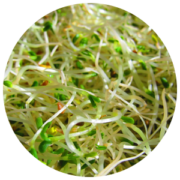 ingredients-alfalfa
