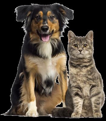 img-cat-dog-02