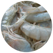 ingredients-shrimps