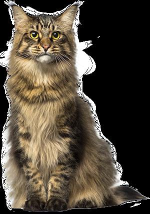 menu-cat